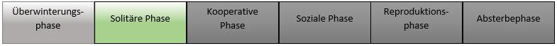 Solitäre Phase