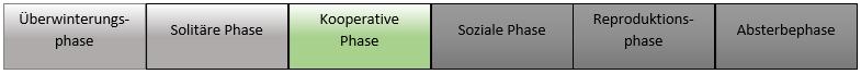 kooperative phase